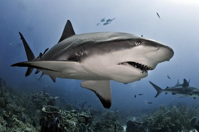 No son una máquina sin alma: descubren que los tiburones tienen personalidad